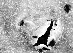 Jää / Ice 199